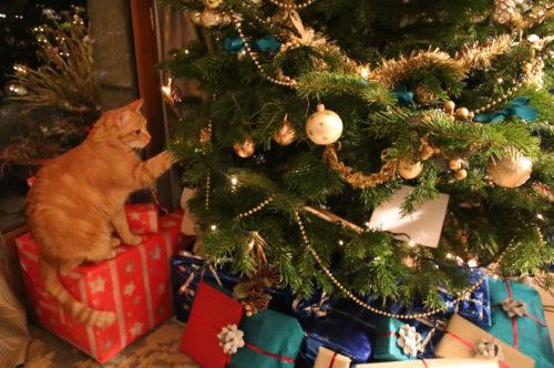 Noël anglais | Le Cabinet de Curiosités de Madeleine Miranda